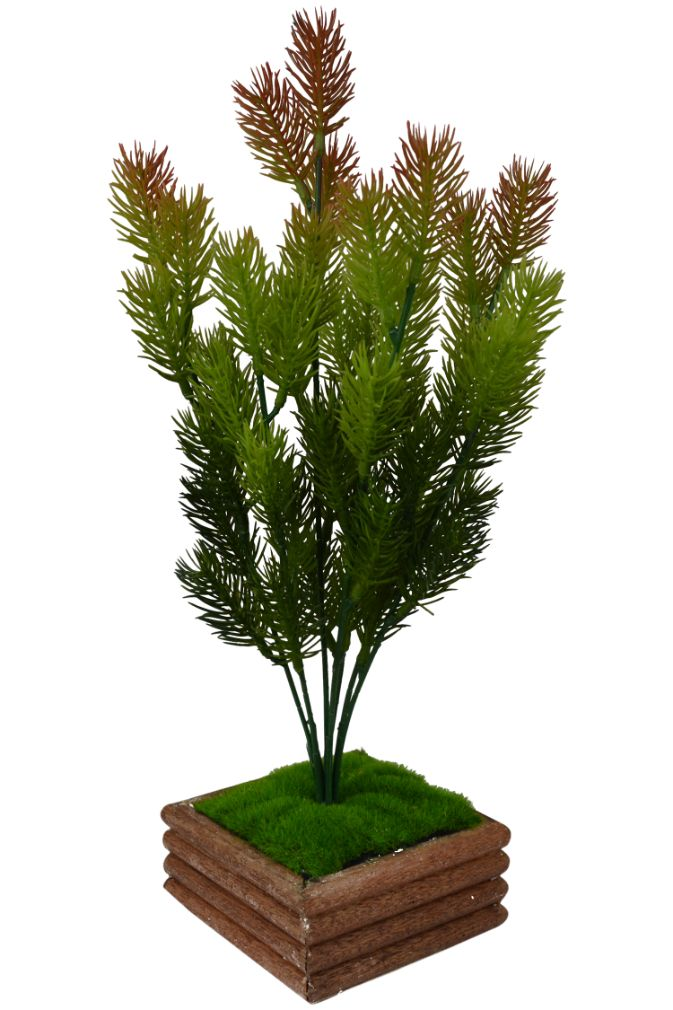 Artificial Bonsai Pine Bush in Wood Square Pot (35 cm, Multi-Color)