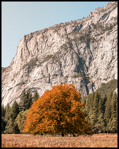 Poster featuring a bright orange tree against pale granite rock formations in Yosemite National Park (United States).
