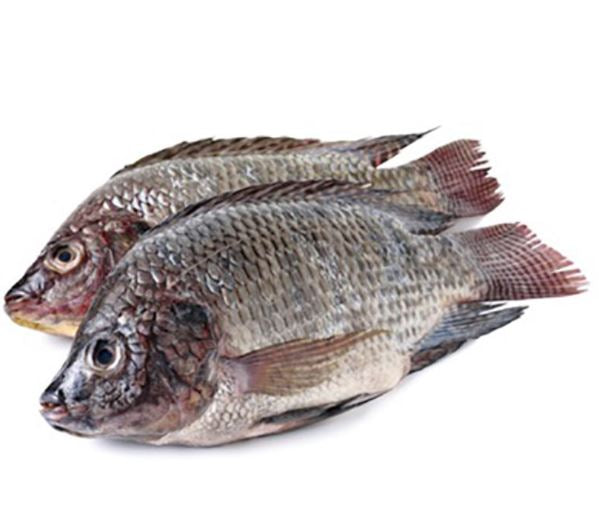 Whole Tilapia Fish (Pack of 2)