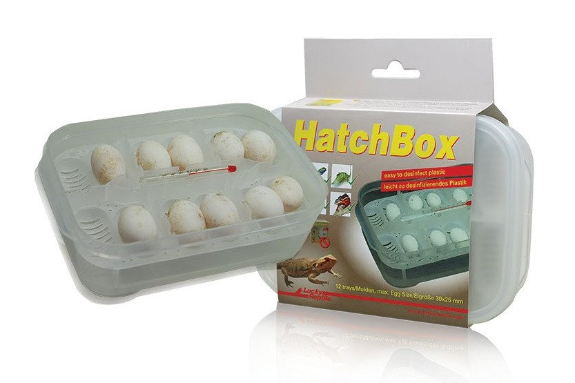 Lucky Reptile Hatchbox Incubation Tray - Reptiles UK