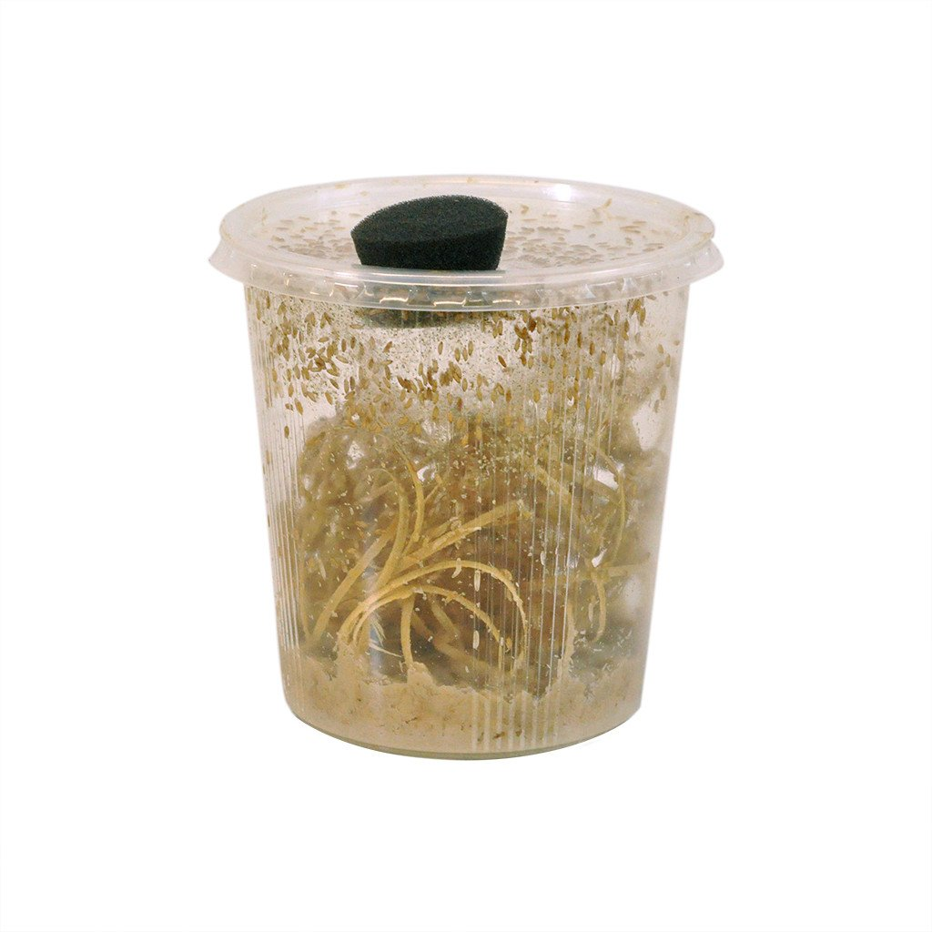 Monkfield Small Fruit Fly Bulk Pot - Reptiles UK