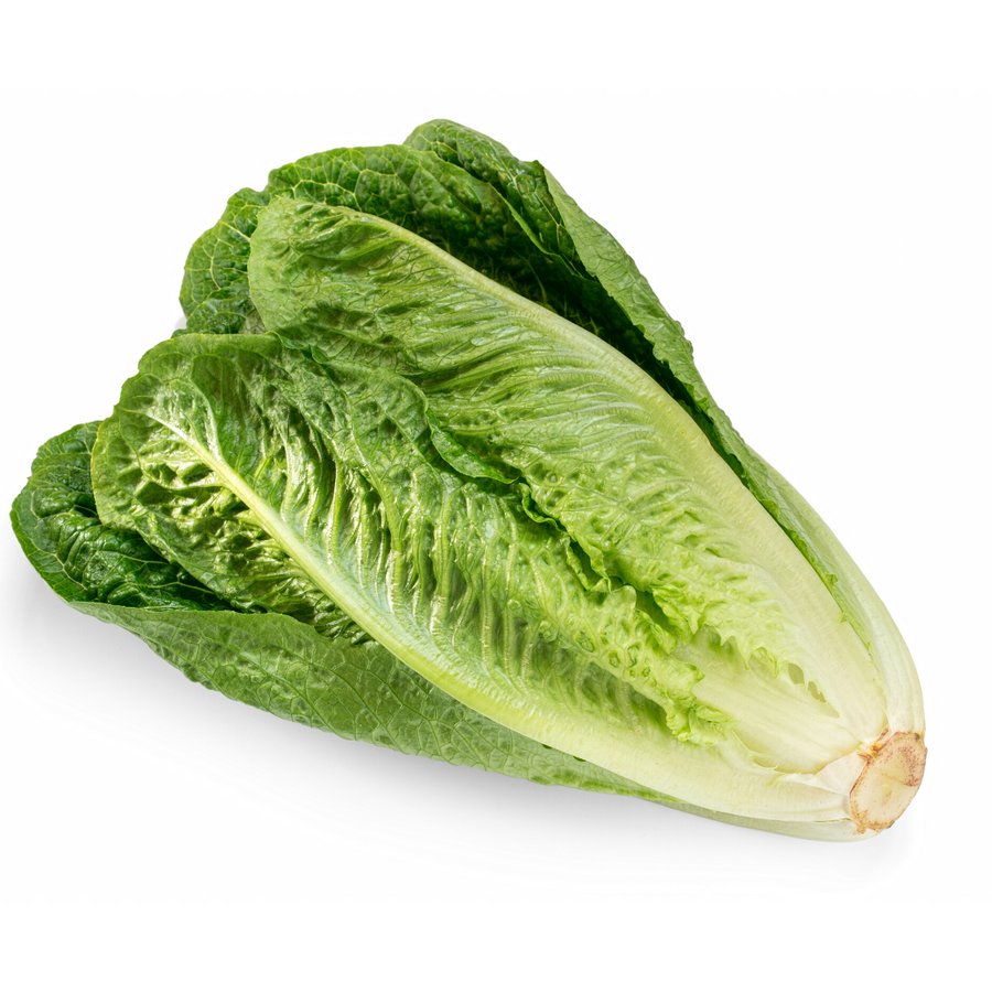 Romaine Lettuce (1 Each)