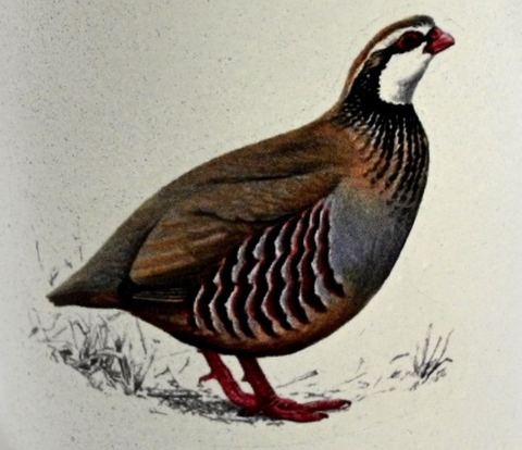 Rectangular Wooden Tray: Partridge