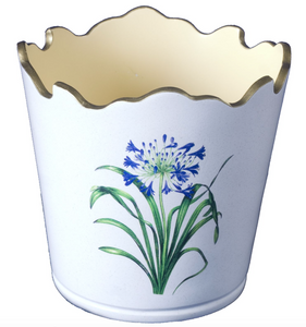 Scalloped Top Cachepot/decorative Planter: Agapanthus
