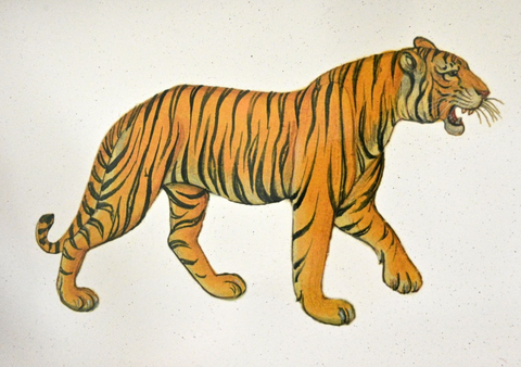 Octagonal Tablemats Set of 4 (boxed): Tiger