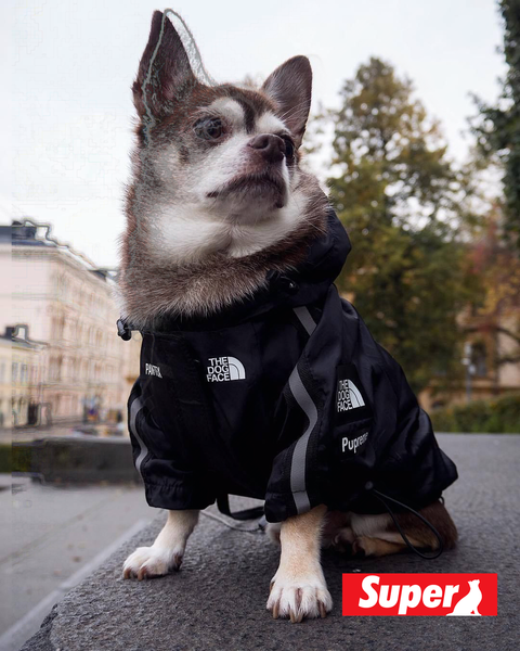 The Dog Face Windbreaker