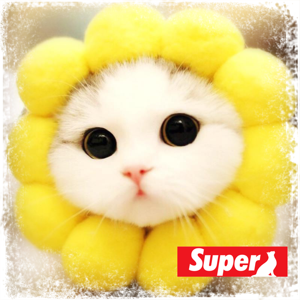 Sunflower and friends! (Pets funny headgear)