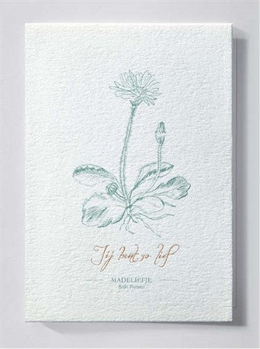 HERBARIUM | Greeting card | Daisy - You're so sweet