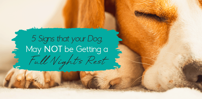 5 Signs Your Dog Is Struggling To Sleep & How To Fix It