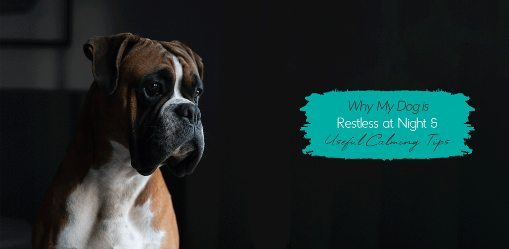 [BLOG] Why My Dog Is Restless at Night & 3 Must-Know dog calming tips | Pets Planet - South Africa's No.1 ePet Store for Premium Pet Products like dog beds, dog collars, dog leashes & more