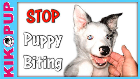 Kikopup dog & puppy training videos