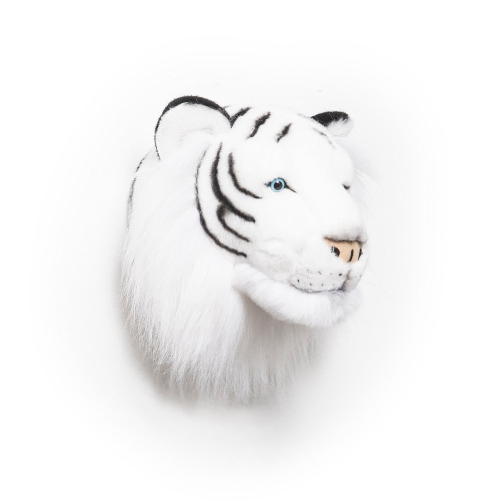 Albert the white tiger