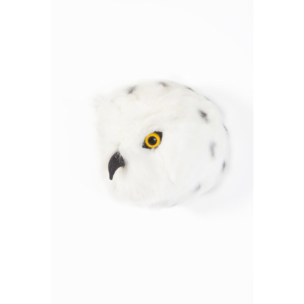 Chloe the snowy owl