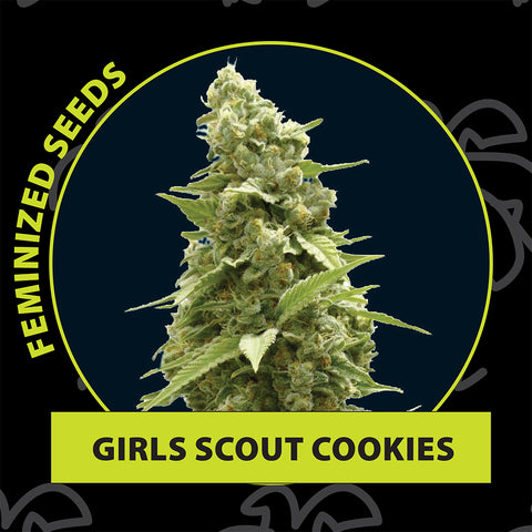 Girls scout cookies feminized