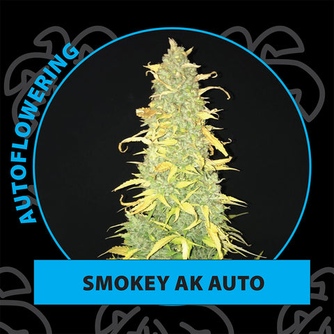 Smokey ak autoflower