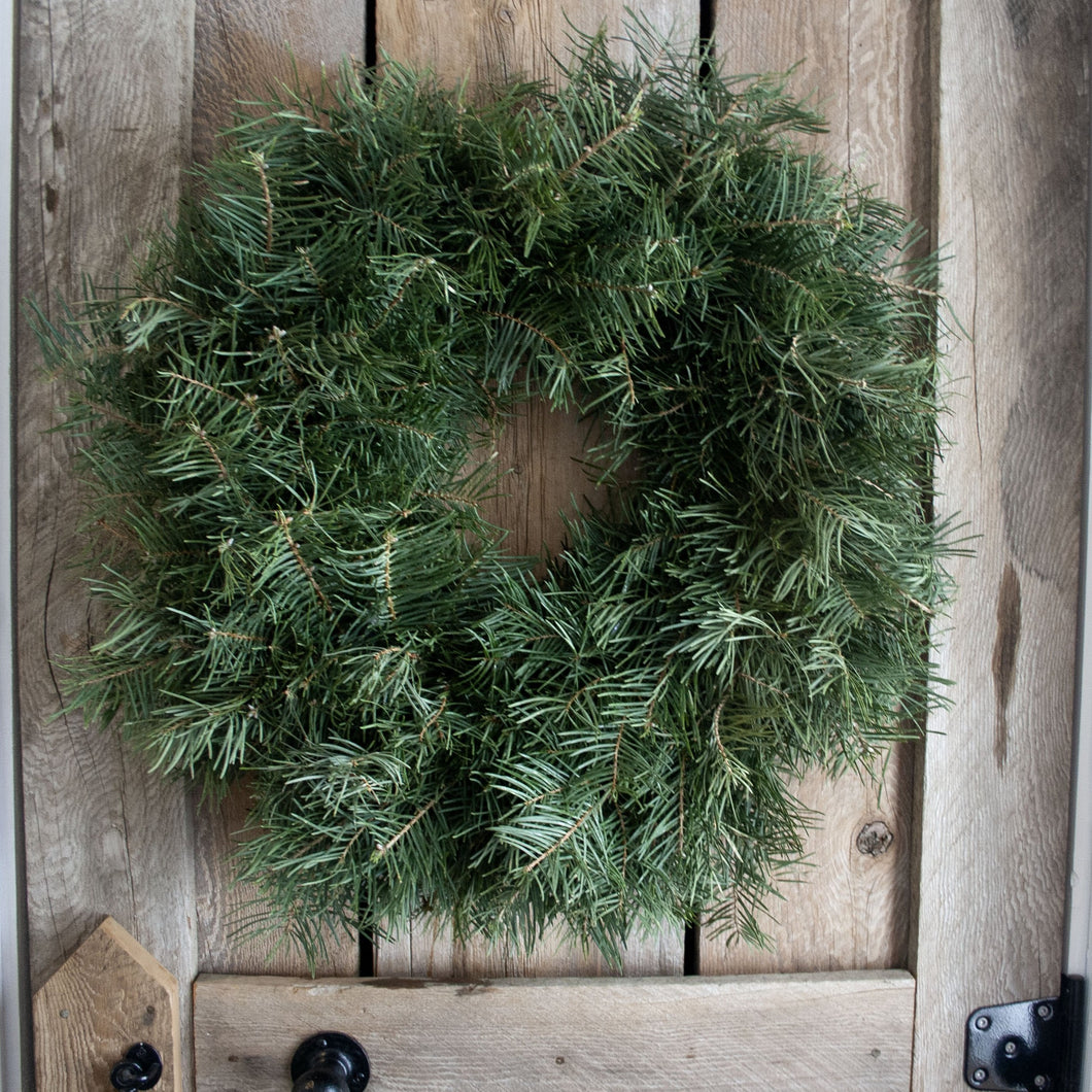 24 Inch Concolor Fir Fresh Christmas Wreath