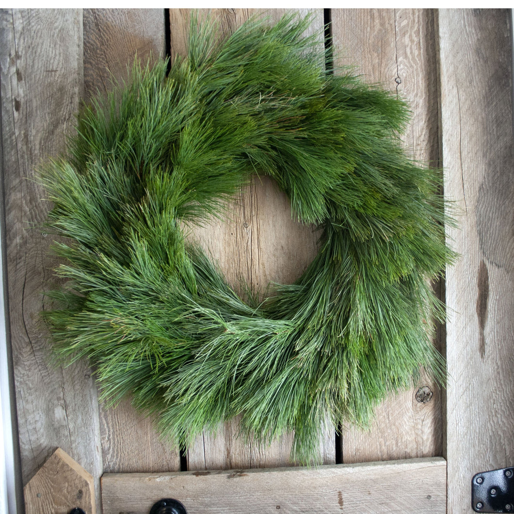 24 Inch White Pine Fresh Christmas Wreath