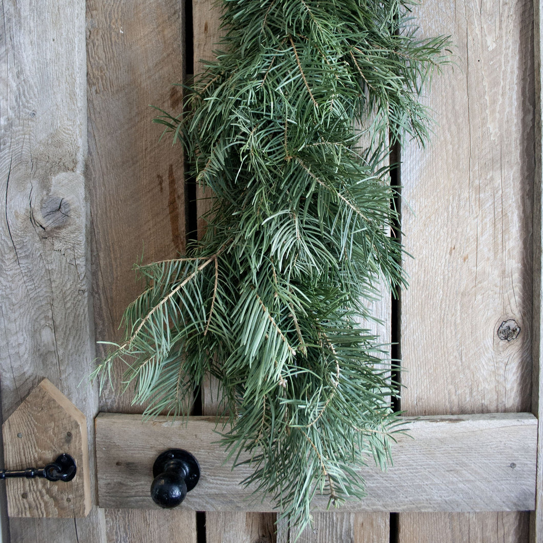 Fresh Concolor Fir Garland (24 Inch to 18 Feet)