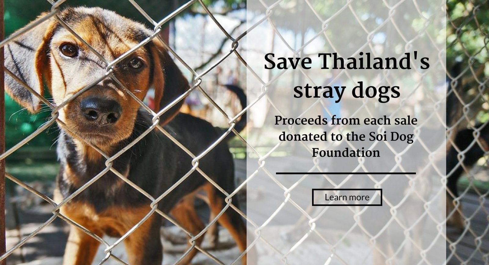 bohemian island soi dog foundation