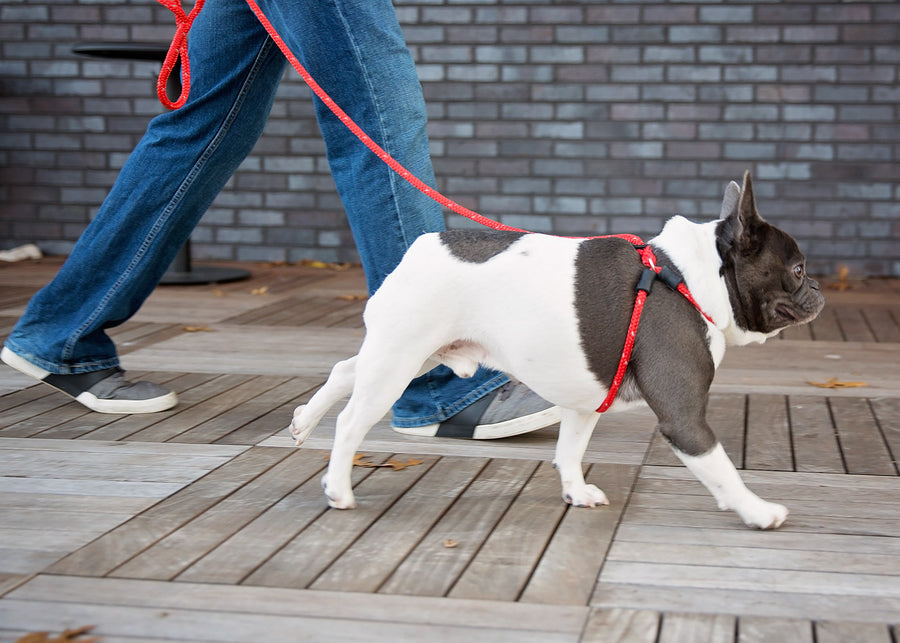 Rad (Red Reflective) Harness Lead