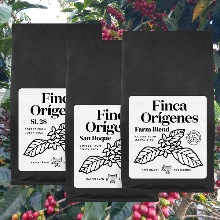 FINCA ORIGINES Variety Bundle 3x250g - kafferaven