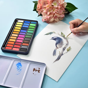 Watercolour Paints | Creative Collection | 12 Colours