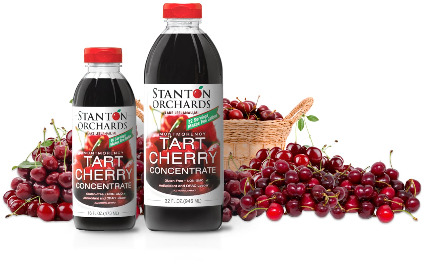 16 oz and 32 oz bottles of Stanton Orchards' tart cherry concentrate with basket of Montmorency cherries