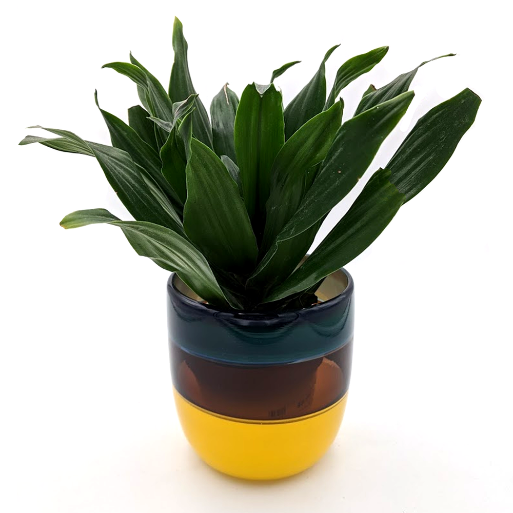 Load image into Gallery viewer, Handblown Glass Planter
