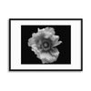 Poppy in Mono by Lotte Grønkjær Framed Print - UH