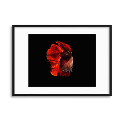 The Red by Andi Halil Framed Print - USTAD HOME