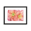Papaver by Mandy Disher Framed Print - UH