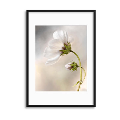 Heavenly Cosmos by Mandy Disher Framed Print - UH