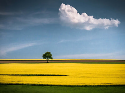 The Tree and the Cloud by Andreas Wonisch Glass Print - UH