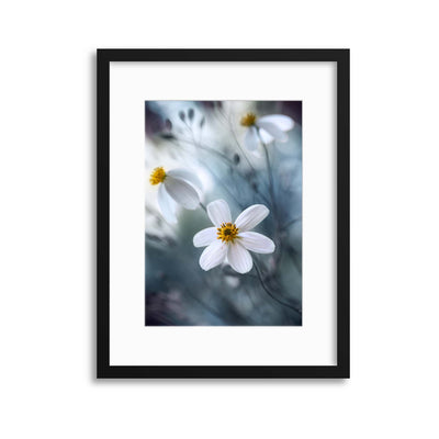 Cosmos by Mandy Disher Framed Print - USTAD HOME