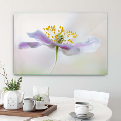 Wood Anemone by Mandy Disher Glass Print - UH