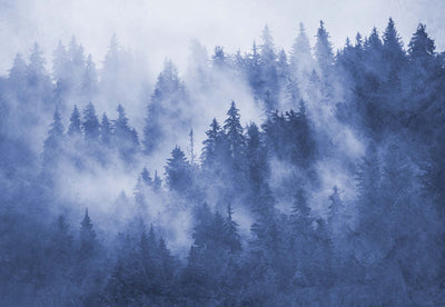 Forest in the Mist Textured in Blue Wallpaper - UH