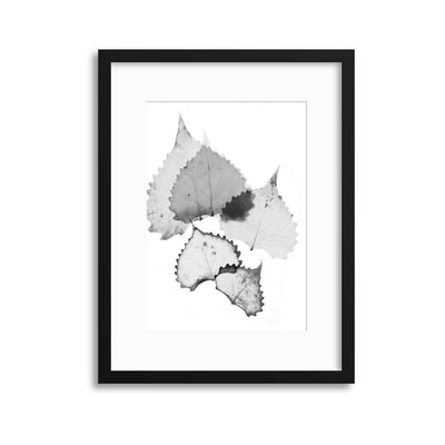 Delicate Shadows Collection No.7 Framed Print - USTAD HOME