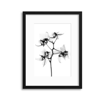 Xray Flowers IV Framed Print - UH