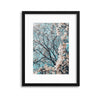 Magnolia Blossoms Framed Print - UH