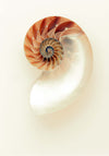 The Nautilus Framed Print - UH