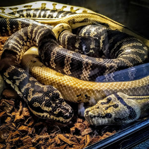 Beginners Guide To Proper Reptile Keeping