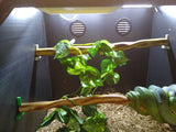 Crested Gecko Kits