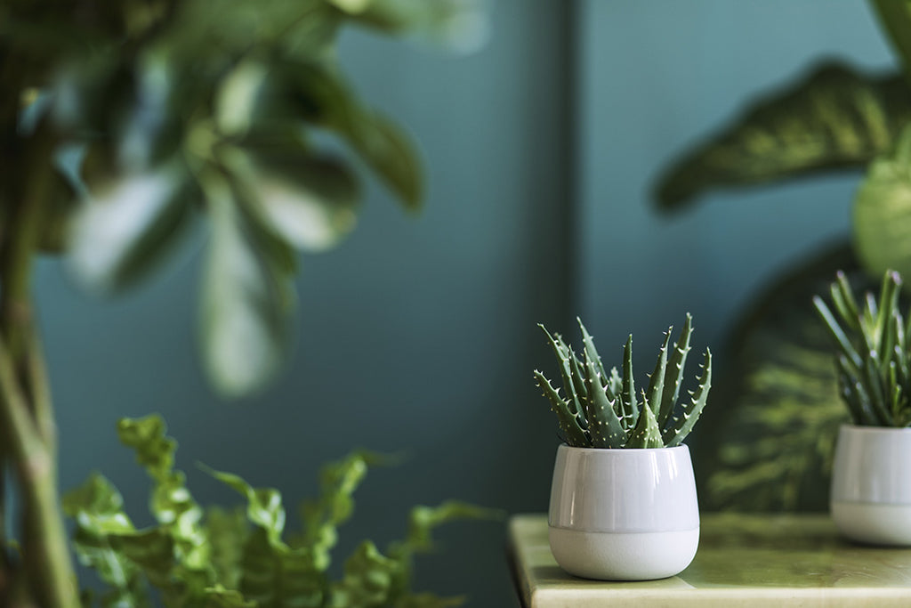 Pot plants and foliage in pretty teal room