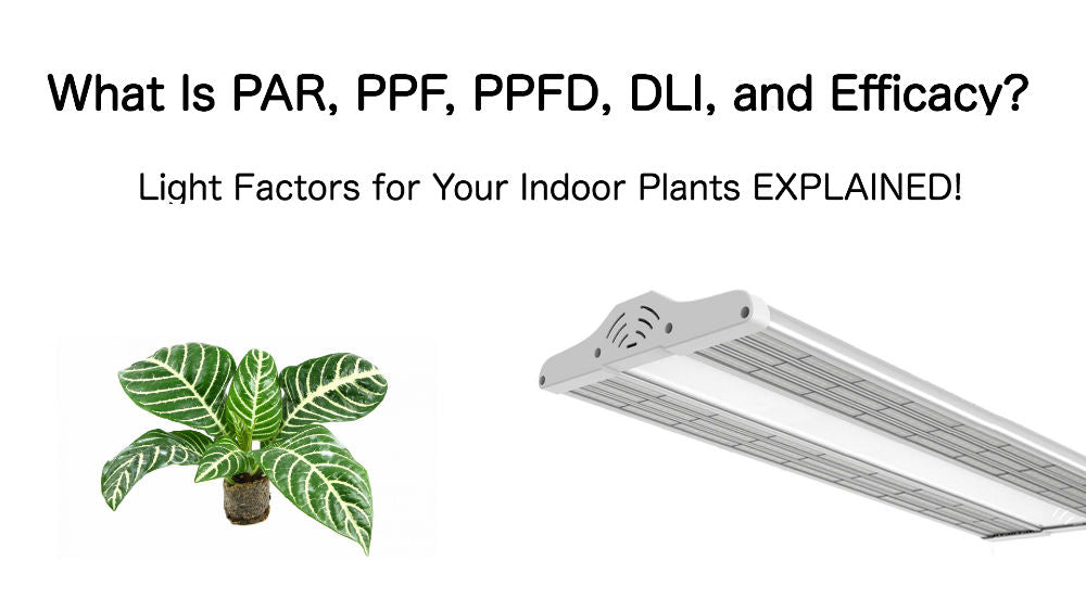 What Is PAR, PPF, PPFD, DLI, and Efficacy? Light Factors for Your Indoor Plants EXPLAINED!