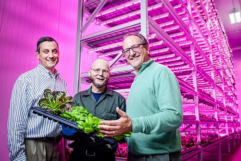 Green Sense Farms Harness LEDs for Horticulture