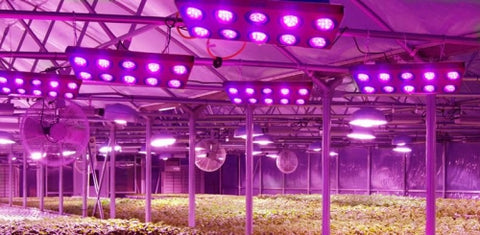 Horticultural LEDs in Japan