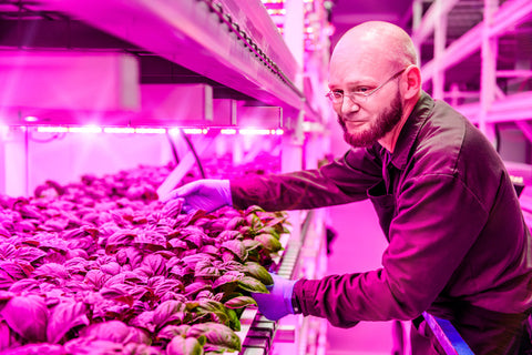 New Tech Shines Light on the Future of Food