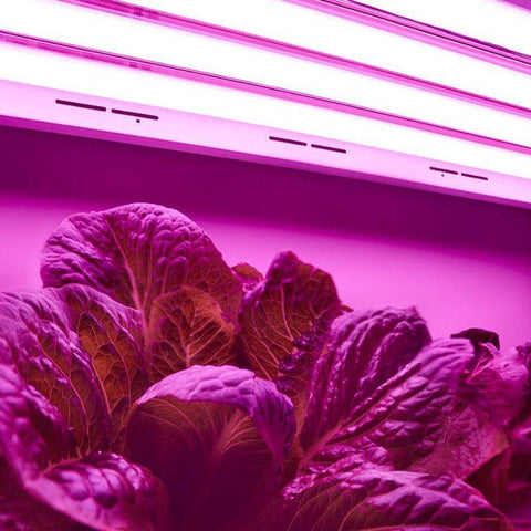 Image of Toggled 8-pack LED Grow Tube  - LED Grow Lights Depot