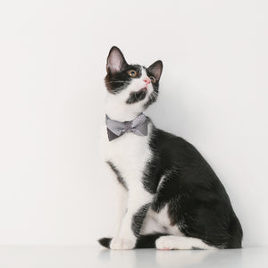 Open image in slideshow, Pidan Bowtie Collar