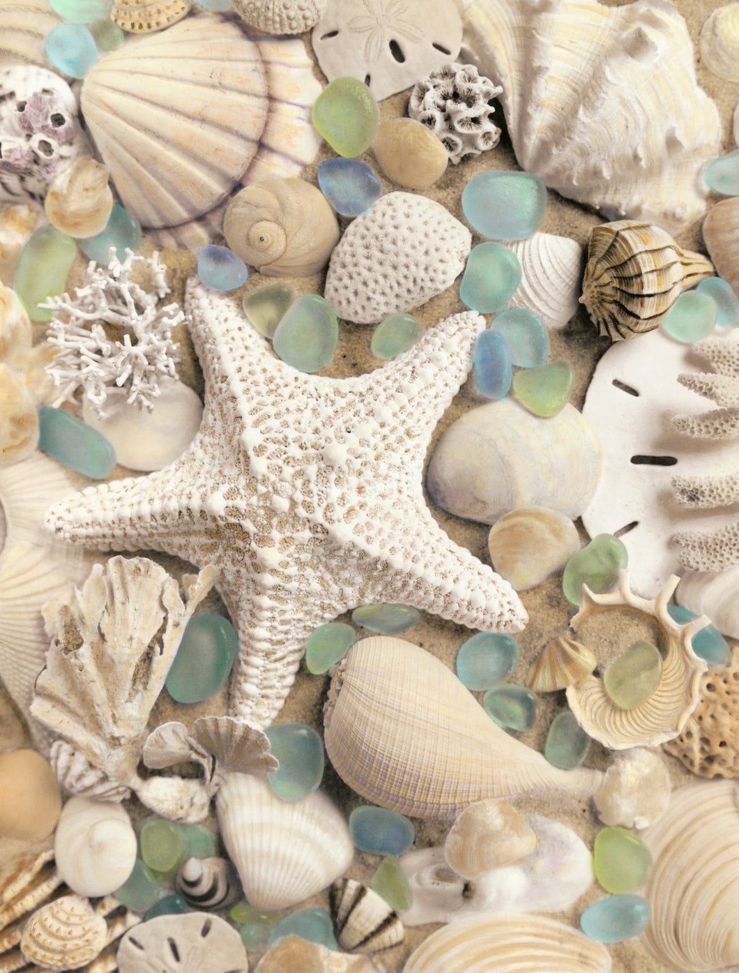 Bahama Starfish and Scallop Artwork